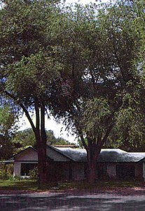 Trees and solar heating
